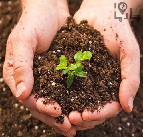 رفع شوری خاک