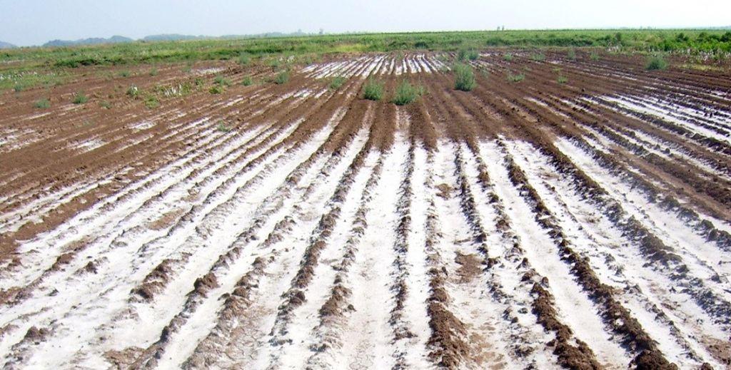 شوری خاک چیست ؟